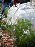 Cloche Gardening