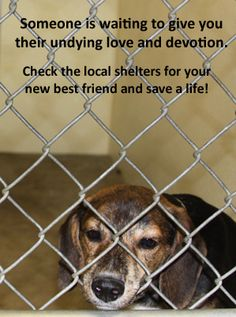 Please rescue or adopt.