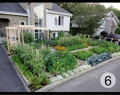 "Edible front gardens - Drummondville, Quebec -  ""The story of a couple who decided to try to live as healthy as possible. This included planting a vegetable garden in front of their house….""  They also won their struggle w/ their city (which tried to ban their garden)"