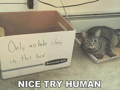 25 Funny Animal Memes And Pictures Of The Day