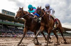 Gormley edges American Anthem in the 2017 Sham Stakes at Santa Anita American Anthem, Horse Racing, Race Horses, Horse Profile, Bay Horse, Churchill Downs, Horse Names, Sport Of Kings, Thoroughbred Horse