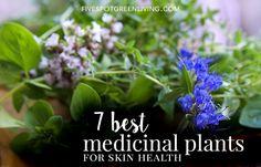 7 Best Plants for Skin Health