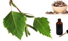 Plant Leaves, Therapy, Varicose Veins, Plant