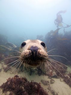 Isles of Scilly seal, my family have been swimming with them!