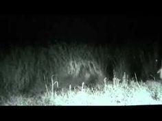 Ufo Evidence: Abdução Filmada