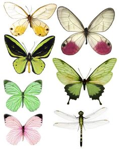 excellent site for butterfly prints for crafting