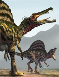 Spinosaurus was among the largest of all known carnivorous dinosaurs, possibly larger than Tyrannosaurus and Giganotosaurus. Estimates of it is between 41–59 ft in length and 7.7 to 23.0 short tons in weight.