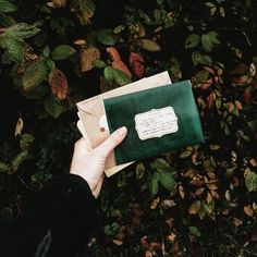 ♚ Bella Montreal ♚ Insta: bella.montreal || Pinterest & WeHeartIt: bella4549 || green aesthetic, letters, autumn