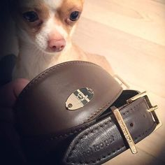 ...these are perfect for my stylish Greyhound friends  not too pet luxury accessories for dogs made in italy #nottoopet #greyhound #wippets #galgo #madeinitaly #luxury #accessories #dog #dogs #chihuahua #chiuy #chihuahuaofinstagram #chihuahuathai #chihuahualovers #dogslover #smalldogs #pet #pets #petstagram #petfashion #genuineleather #design #fashion #style #love #cutie #amazing #beautiful #instadogs #weeklyfluff  Photo By: nottoopet  http://bit.ly/teacupdogshq