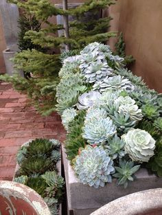 Things We Love...Succulents — Providence Design