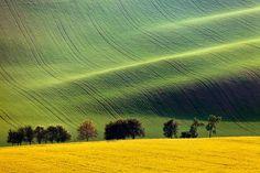 Field Waves