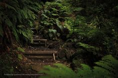Robinson Crusoe, Chile, Forests, Places, Travel, Inspiration, Beauty, Places To Visit, Islands