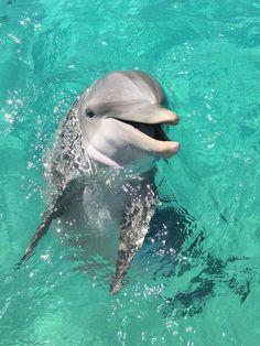 Underwater Animals, Underwater Creatures, Ocean Creatures, Baby Animals Super Cute, Cute Little Animals, Dolphin Photos, Baby Dolphins, Bottlenose Dolphin, Mundo Animal