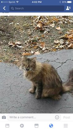 Jennifer Bliesener JambardEnfield CT Pets Lost and Found January 7 ·   Missing kitty. She has been missing for 5 days. Freemont Rd, Dover area in Enfield. Please contact Tiffany at 860-690-8136 if seen or comment below.