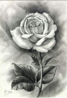 45 beautiful flower drawings and realistic color pencil draw Easy Flower Drawings, Beautiful Flower Drawings, Pencil Drawings Of Flowers, Pencil Art Drawings, Realistic Drawings, Art Drawings Sketches, Rose Drawings, Realistic Flower Drawing, Flower Sketch Pencil