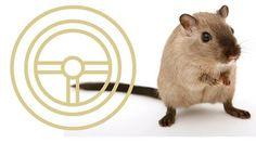 """⚜⚜ Selbstcoaching: Raus aus dem Hamsterrad ⚜⚜  In diesem Workshop lernen Interessierte wirksame Methoden, um sich selbst besser zu verstehen, sich anzunehmen und neue Lösungsstrategien """"Raus aus dem Hamsterrad"""" zu entwickeln."""