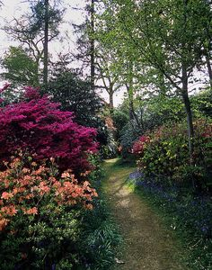Leonardslee Gardens, West Sussex, UK | Woodland path filled with colorful flowering azaleas and rhododendrons (19 of 23) by ukgardenphotos, via Flickr