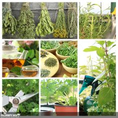 Herbs & veges can be a great addition to your balcony or garden for taste, smell and visual purposes to enhance the place you call home.