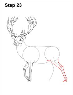 Learn how to draw a Red Deer with this how-to video and step-by-step drawing instructions. Pencil Art Drawings, Realistic Drawings, Animal Drawings, Easy Drawings, Drawing Sketches, Deer Drawing Easy, Easy Christmas Drawings, Deer Sketch, Doodle Art For Beginners