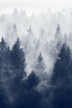 Forest Of Fog Wallpaper Landscape Nature Wallpapers) – Funny Pictures Crazy Photography Winter, Landscape Photography, Art Photography, Forest Photography, Wildlife Photography, Trees Tumblr, All Nature, Christmas Aesthetic, Autumn Aesthetic