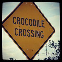 Crocodile crossing - The Keys, Florida