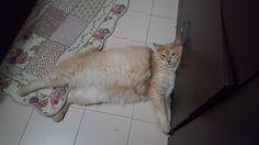 Frisky Cat | Pawshake