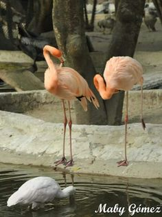 Zoo LA AURORA CIUDAD DE GUATEMALA Fotografía MABY GÓMEZ