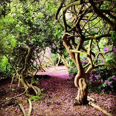Fairhaven Water Gardens, Norfolk Uk