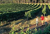 Visit some wineries in Margaret River, WA