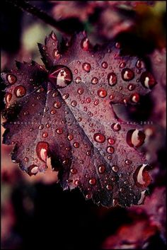 Autumn leaves that deep rich burgundy color - noblesse - - Autumn leaves that deep rich burgundy color - noblesse Shades Of Burgundy, Burgundy Wine, Burgundy Color, Red Plum, Dark Red, Burgundy Wedding, Plum Colour, Burgundy Shoes, Maroon Wedding