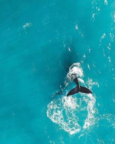 Australia From Above: Stunning Drone Photography by Amber Cree, Ocean Photography, Drone Photography, Animal Photography, Photography Ideas, Collage Mural, Photo Wall Collage, Underwater Animals, Ocean Wallpaper, Beach Aesthetic