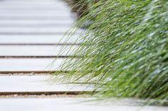 #peterfudge Stepping Stone Pathway, Planting, Gardening, Stone Steps, Coastal Landscaping, Coastal Gardens, Flower Landscape, Weekend Fun, Garden Planning