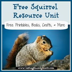 Free Squirrel Resource Unit including nature studies, printables, games, books, and lots more!