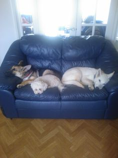 And to sleep -Archie, Ted & Molly