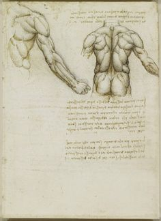 leonardo da Vinci - The muscles of the back and arm. c. 1508