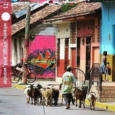 From @wheels_wings_and_wonder: Postcard from #Granada #Nicaragua #ILoveGranada…