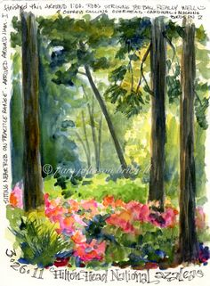 South Carolina Low Country Nature Journaling and Art: Azalea Time
