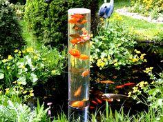 Mirador para peces