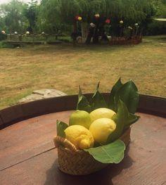 #centro de #mesa con #limones para #boda rústica