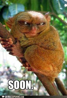funny animals, funni stuff, laugh, funni anim, tarsier, ebil planz, funny memes, funni meme, big plan