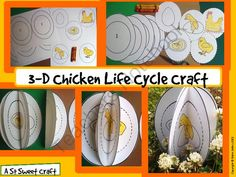 Life Cycle of a Chicken 3D Craftivity for Life Cycle Science Units from Sweet Tea Classroom on TeachersNotebook.com -  (10 pages)  - Life Cycle of a Chicken Craftivity