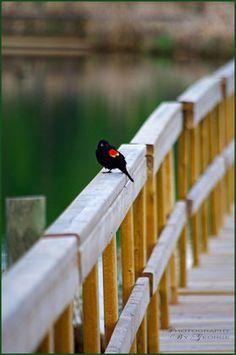 Ominik Marsh Boardwalk, RMNP.  So many beautiful photographs on Viewbug! #photography
