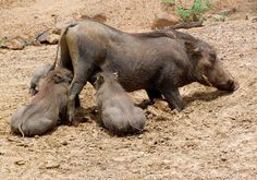 South Africa – Pilanesberg Game Reserve and National Park