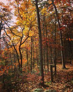 #WonderWatch 2015-135 Hallowed Path #Halloween #October #GlimpsesOfFall #Peaceful #fall #Autumn #instabeauty #leaves #nature #NaturePhotography #oh #Portal #PoconoMtns #sandylongphotos #UpperDelawareRiverRegion #inviting #instagood #instadaily #instamood #instalike #instagram #pennsylvania #PikeCountyPA