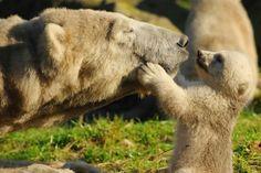 Animali e Amore Materno - 1