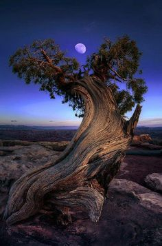 beautiful tree with the moon