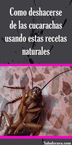 21 Ideas De Eliminar Cucarachas En 2021 Cucarachas Matar Cucarachas Remedios Para Cucarachas