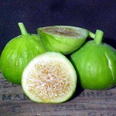 White Marseilles Italian Honey Fig Plant