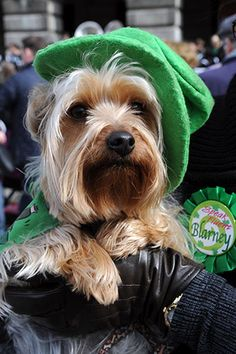 20 Dogs & Cats Who Are Ready For St. Patrick's Day
