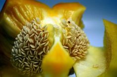 Preserving Heritage: How to Save Heirloom Vegetable Seeds